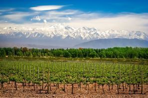 Ubytování Mendoza, Argentína