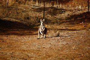 Ubytování Tamworth, Austrália