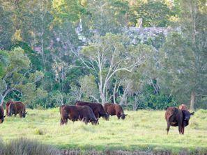 Ubytování Taree, Austrália