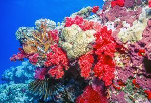 Ubytování Coral Coast, Fidži