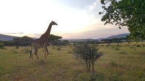 Ubytování Rustenburg, Juhoafrická republika